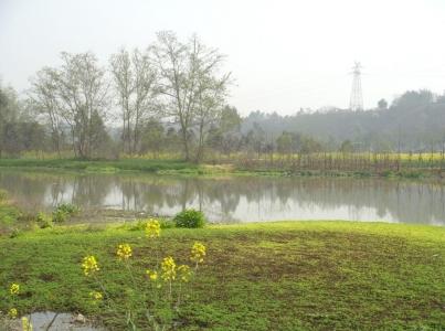 杨柳河 繁丽乡愁如逝水